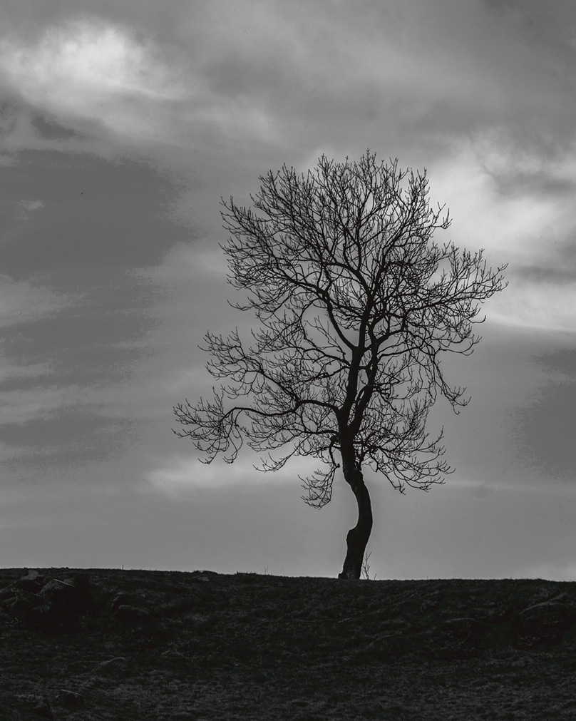 Lonely tree 72px