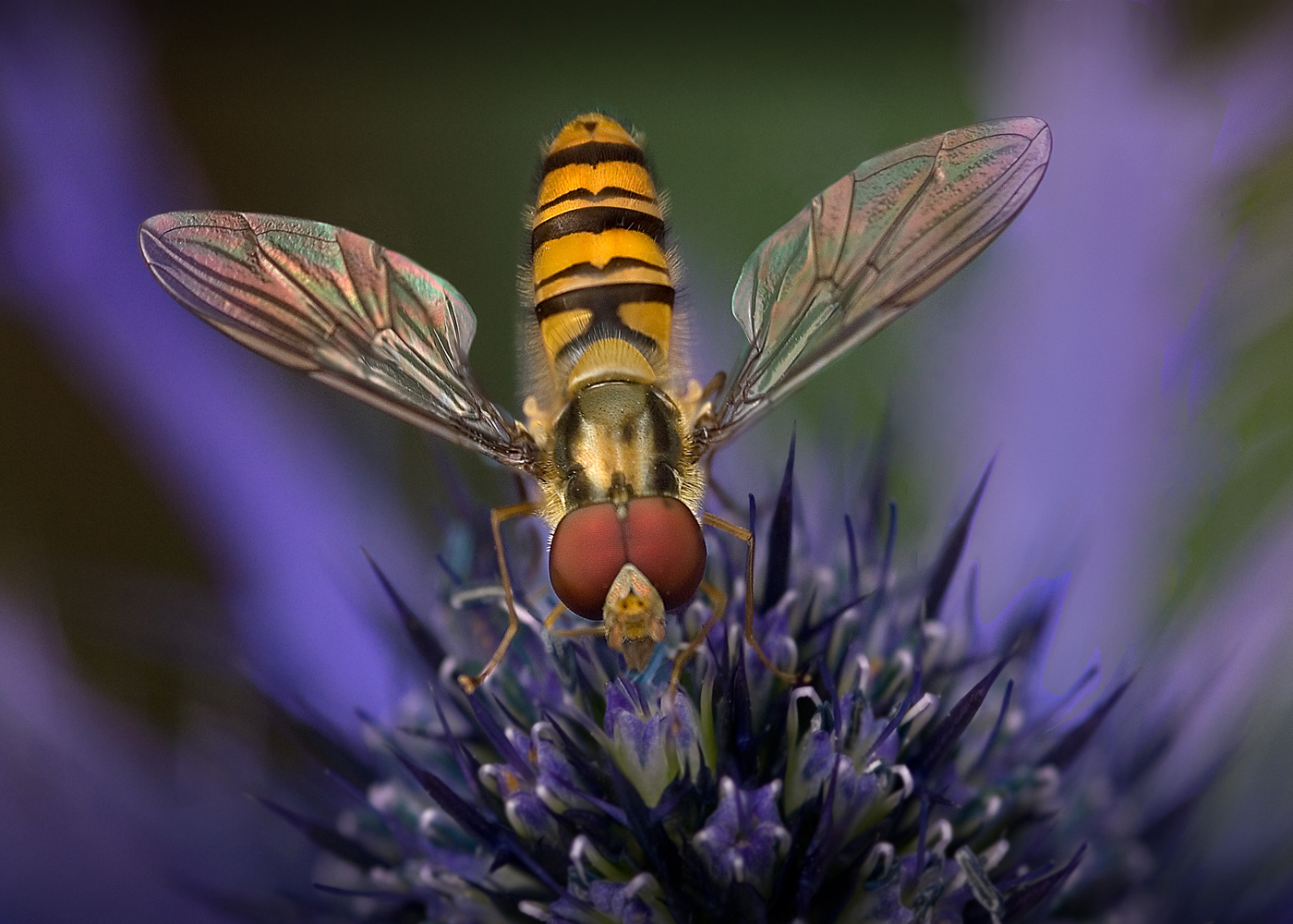 Hoverfly Mike Williamson