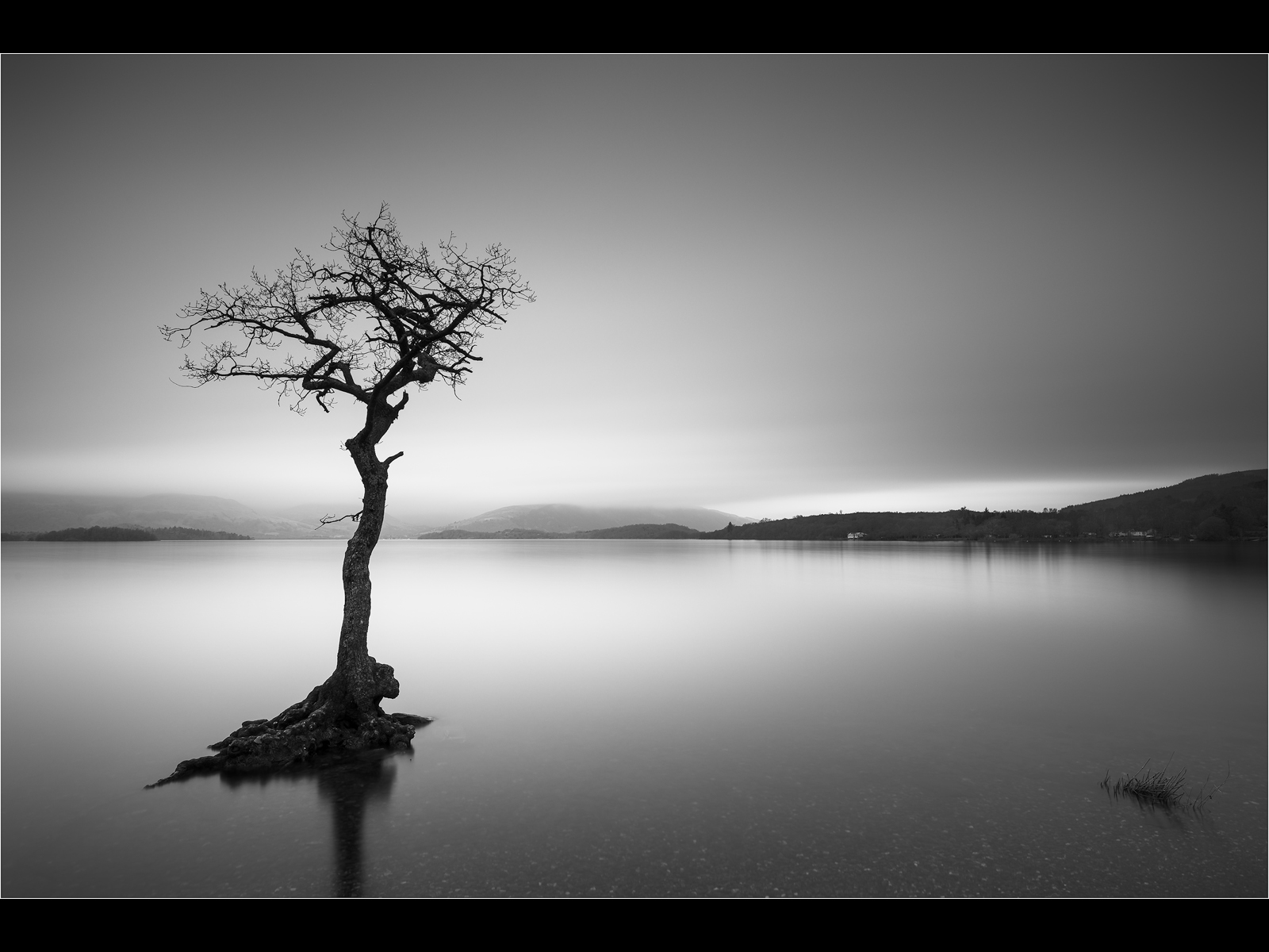 The_Lone_Tree_-_Loch_Lomond.jpg